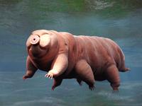 Jai tardigrade bhagwan ki jai. Makes sense to add the strongest being on this planet in our pantheon of gods