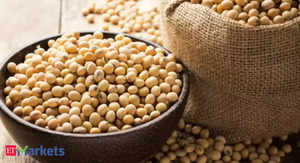 soybean new