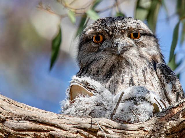 Meet the world's most Instagrammable bird