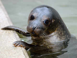 Touch me not! Tourists fined $500 over viral endangered seal video