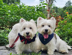 Digital puppers: Singapore-based pet influencers are winning hearts, and earning a lot of money