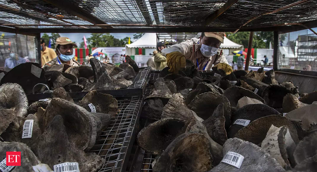 Assam consigned 2500 rhino horns to flames today. Here's why thumbnail