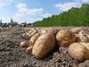 The problem with the common theory about origins of potatoes in India