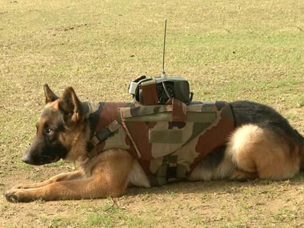 Indian Army: 'Buzo', 'Roma', 'Devil': Canine brave hearts on national duty - The Economic Times