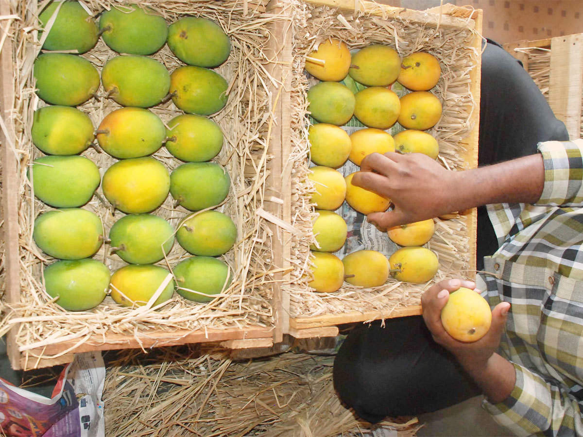 Ig International To Import Alphonso Mangoes From South Africa