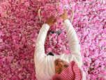 Saudi Arabia's city of roses blooms