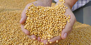 Soyabean price falls 7% in Feb after rising 15% last month