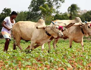 किसानों की खुशहाली के लिए इन 3 समस्याओं का निकालना होगा हल