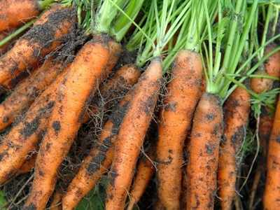 Truefarm Foods makes its organic food available on Amazon India