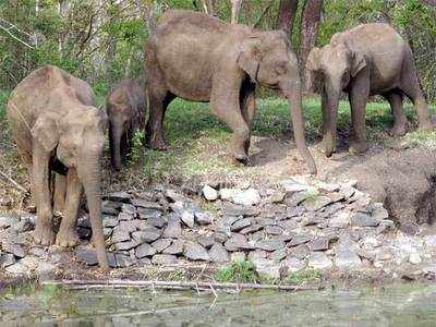 Nagarhole national park: Latest News & Videos, Photos about