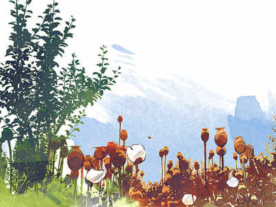Opium trade sluggish as norms, infra beg for upgrade