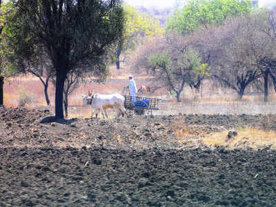 BJP's rural votes show talk of farm crisis misleading