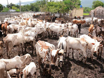 Livestock population up by 4.6%; cow count rises by 18%