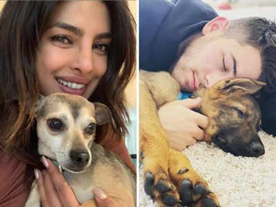 Nick Jonas's pup Gino is already a bigger Instagram star than Priyanka Chopra's Diana
