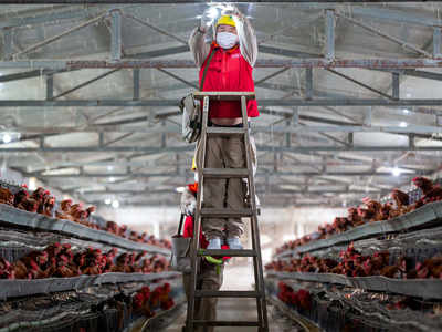 Coronavirus rumours hit sales of egg, chicken