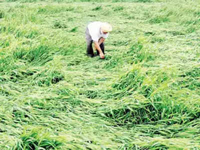 Unseasonal rains: Rajya Sabha members demand relief package for farmers