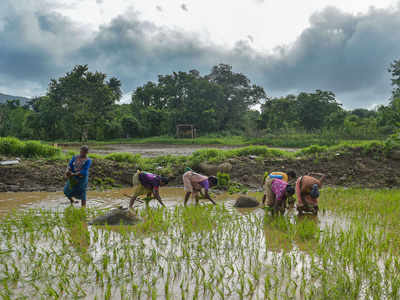 Govt on track to doubling farmers' income by 2024: Agriculture Ministry official