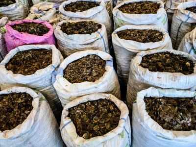 Tiger, pangolin farming in Myanmar risks 'boosting demand'