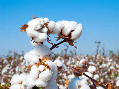 Low Indian cotton prices, weak demand and increased sowing worry traders, industry