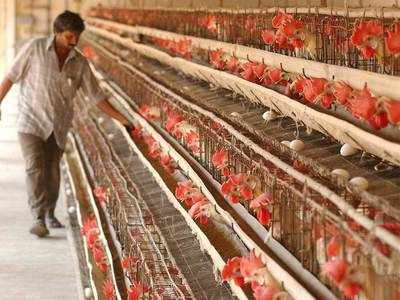 Bird flu: All 3 MCDs ban sale, storage of poultry or processed chicken meat