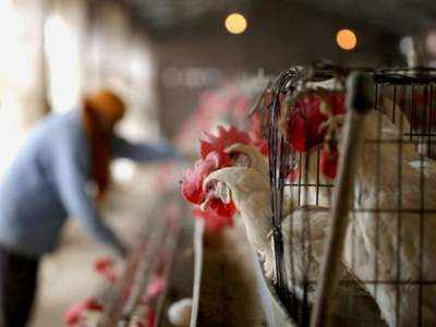 Civil Aviation Ministry asked to allow uninterrupted transportation of samples for bird flu testing