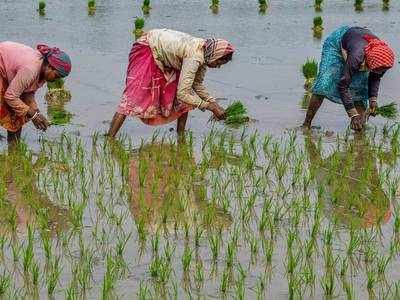 Paddy procurement up by 27.15%: Food ministry