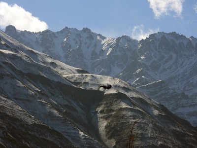 Ladakh standoff: Indian, Chinese armies hold 9th round of military talks