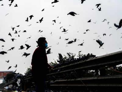 6,126 more birds die in Maharashtra; samples sent for testing