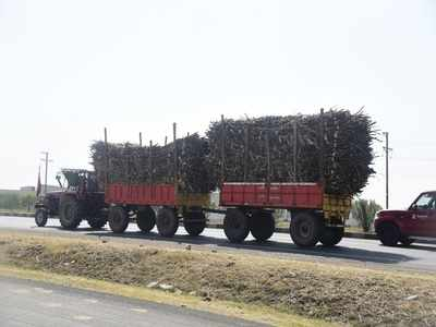 From farms to mills, it's a long wait for Western UP farmers just to get sugarcane weighed