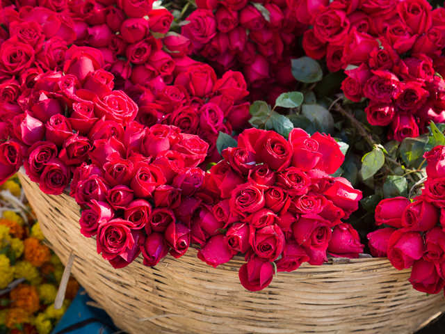 Roses Too Smell Slowdown Unpredictable Weather Results In 60