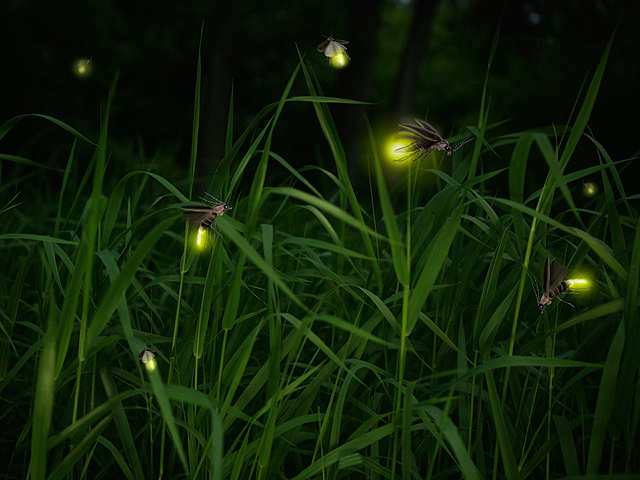 Want To Spend The Night Admiring Fireflies Plan A Trip To Dang In