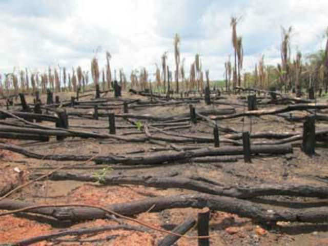 Image result for forest cutting indiatimes