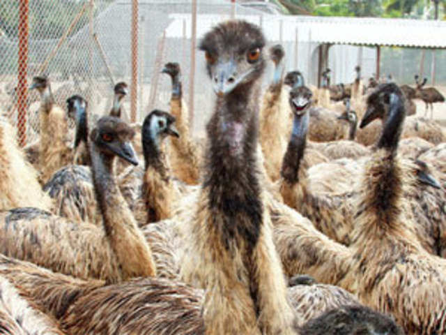 from-emu-farms-to-guar-crops-why-the-des