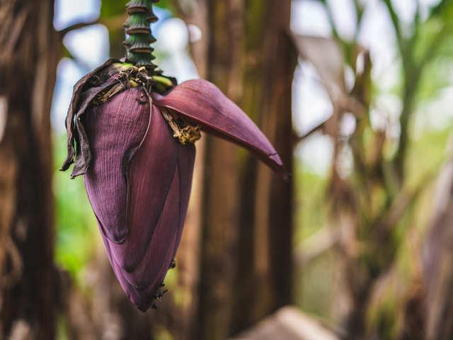 banana flower did you know that shukto a bengali banana