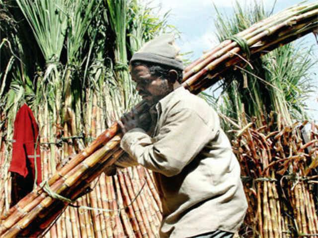UP sugar mills may falter on huge cane-price arrears next season ...