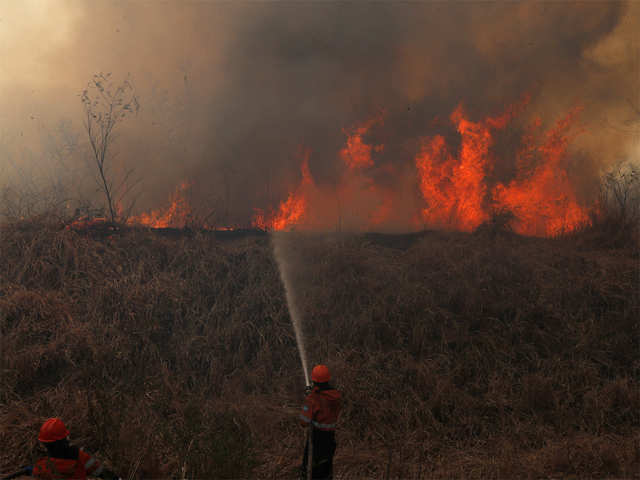 Amazon Forest Fires Missing The Forest For The Trees The